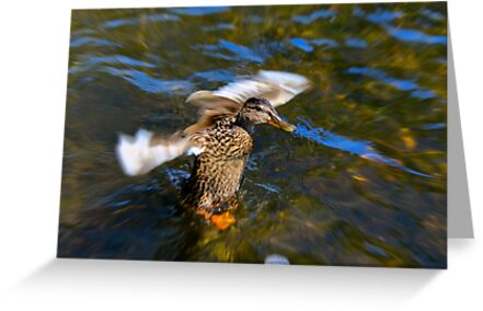 Pre-Flight Duck by Sue Morgan
