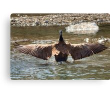 Wing Span Canvas Print