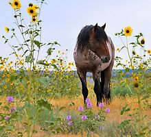 Roan Foal and Sunflowers by Kellith