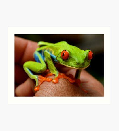 Red-Eyed Treefrog (Agalychnis callidryas)  Art Print