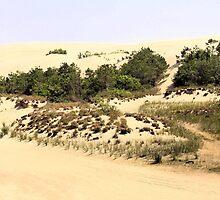 Jockey's Ridge by WeeZie