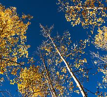 Blue Skies and Gold Leaves by Greg Summers
