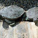 Turtle Twins by WildestArt
