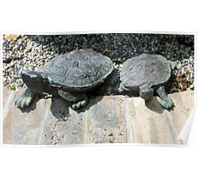 Turtle Twins Poster