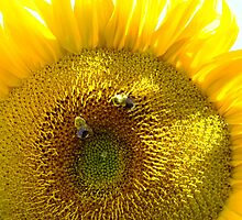 Two Busy Bees And The Blazing Sunflower by Tracy Faught