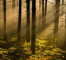 In The Woods by John Dunbar