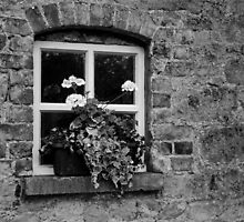 Oldbridge Window by Martina Fagan