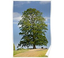 A Lonely Tree Poster
