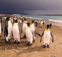 Penguin Paradise by Janette Rodgers