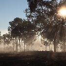 Morning Rays At The Olive Grove by Saraswati-she