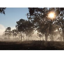 Morning Rays At The Olive Grove Photographic Print