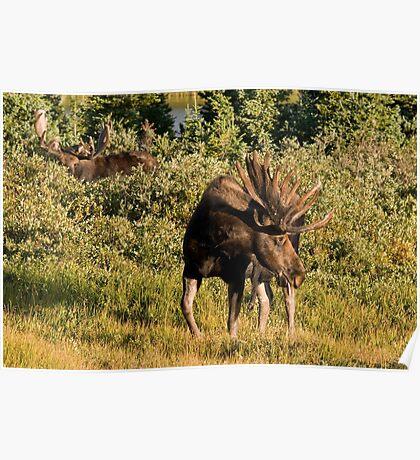 Moose tongue Poster