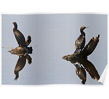 Cormorant Reflections Poster