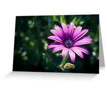 Pink Daisy     (EH) Greeting Card
