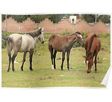 Herd of Horses Grazing Poster