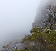 View from Bluff Knoll as the fog starts to lifts   by RickLionheart