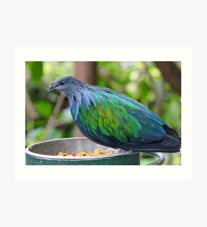 Multi Colored Poofy Bird Art Print