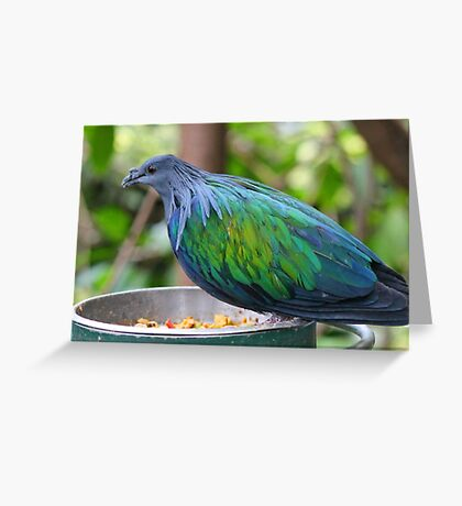 Multi Colored Poofy Bird Greeting Card