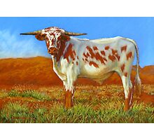 Longhorn In The Outback Photographic Print