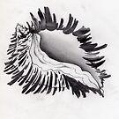 whelk shell, monochromatic seashell by resonanteye
