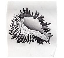 whelk shell, monochromatic seashell Poster