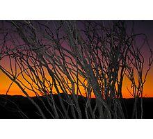 Ocotillo at Sunset Photographic Print