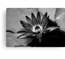 Water Lilly, cramatic in BW Canvas Print