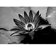 Water Lilly, cramatic in BW Photographic Print