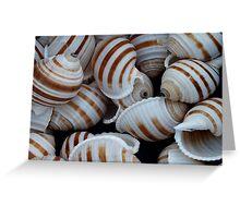Stripey Shells Greeting Card