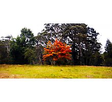 Autumn Colours I Photographic Print