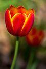 Spring by yolanda