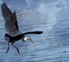 Heron in Flight by BoB Davis