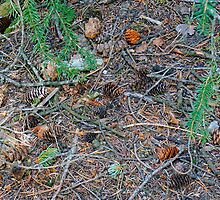 Pine Cones by Harry Oldmeadow