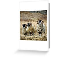 Cairnsmore Rams Greeting Card