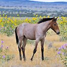 Wild Foal Framed In Wild Flowers by Kelly Jay