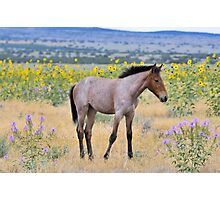 Wild Foal Framed In Wild Flowers Photographic Print