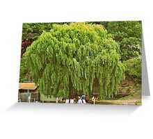 Willow Tree and Boat nature and nautical photography Greeting Card