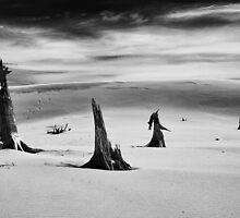 Dead Trees 1 by Doug Brodke