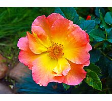 Blooming Radience  Photographic Print