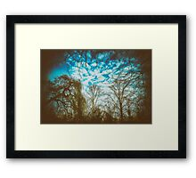 All kind of trees in one picture Framed Print