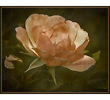 To A Wild Rose Photographic Print