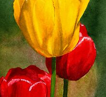 Tulips Watercolor by AngelaBishop