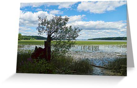 Lone Tree Dreams by PineSinger