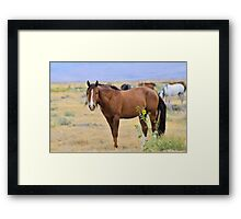 Contented Bay Framed Print