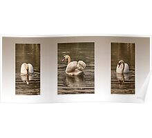 Swan Triptych - Best Viewed Large Poster