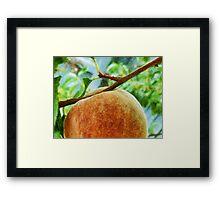 The Peach Framed Print