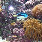 Aquarium by merrychris