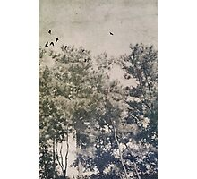 The Straggler Photographic Print