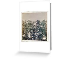 Leaky Light Woods Greeting Card