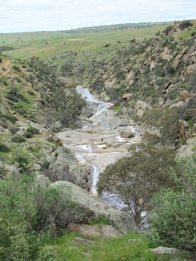 Looking Back! to the curve, Mannum Gorge, S.A. by Rita Blom